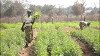 A brighter future through food security